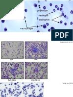 Celulas presentes BAL de camundongos