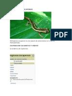 Fauna Endemica de Guate