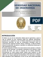 EL FOSFATO 2016.pptx