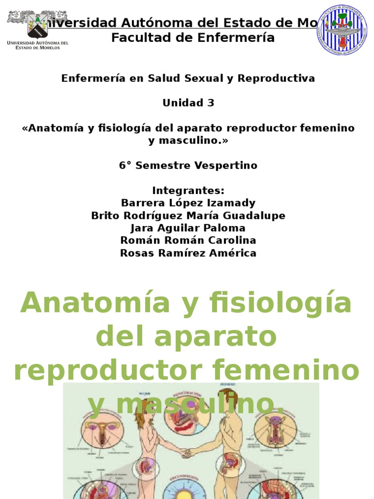 Anatomia y fisiologia del apto rep masc y fem.pptx
