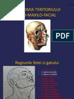 Anatomie Oro Maxilo Facială