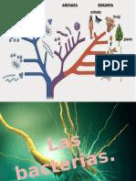 Bacterias Fitopatologia