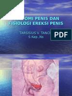 Anatomi Penis Dan Fisiologi Ereksi Penis