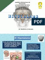 Endocrino II. Hipotalamo