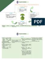 PLAN DE PREPARACIÓN Y MEJORAMIENTO CONTINUO. (1).docx
