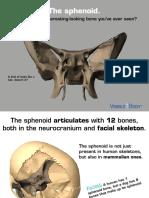 Sphenoid eBook 041715