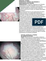 imagens-de-pato-2da-parte-1.pdf