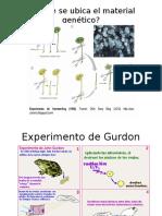 Estructura y Organización Del ADN