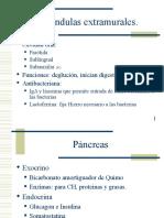 Glandulas anexas histologia