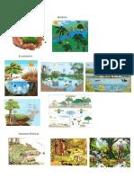 Ecología Biosfera