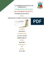 clasificación de las plantas