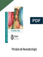 Principios de Neuropsicologia y Anatomia