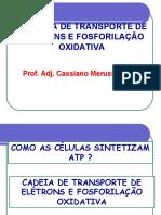 Cadeia de Transporte de Eletrons e Fosf Oxidativa - Sintese de ATP