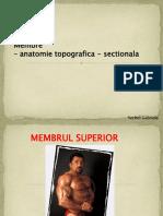 M2 - Curs 13 Membru Superior