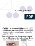2-Cornea