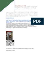 Propiedades y Cambios Físicos y Químicos de La Materia