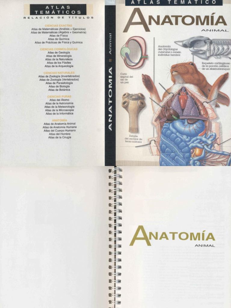 Anatomía Animal - Victor Muedra