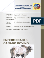 Principales Enfermedades Del Ganado Bovino