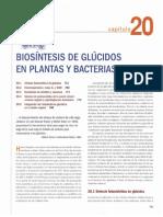 CAPITULO 20 BIOSINTESIS DE GLUCIDOS EN PLANTAS Y BACTERIAS.pdf
