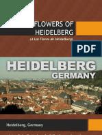 Alas Flores de Heidelberg