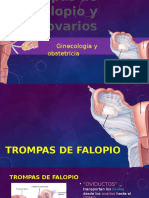 Trompas de Falopio y Ovarios