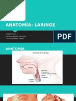 Anatomia de Laringe Final
