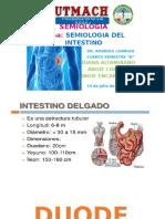 Semiologia  Intestino