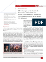 A New Insight on the Symbiotic Association between the Fan Mussel Pinna Rudis and the Shrimp Pontonia Pinnophylax in the Azores (NE Atlantic)