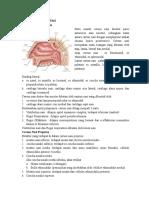 129933955-Anatomy-Cavum-Nasi.doc