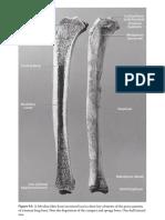Anatomía Del Hueso - White&Folkens - The Human Bone Manual