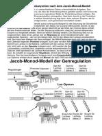 Gen Regulation