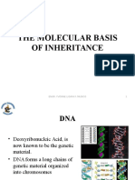 Molecular Basis of Inheritance