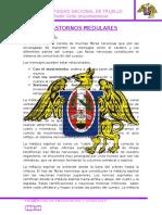 TRASSTORNOS MEDULARES.docx