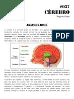 037 Anatomy Book Cérebro