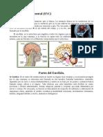 Sistema Nerviosa Central