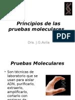 Teoría Rol de La Baiología Molecular en La Microbiología (Medicina 15-04-2016)