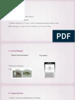 seminario 2 (4).pptx