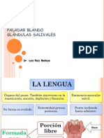 Anatomia Lengua y Paladar