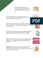 Hipodermis.docx