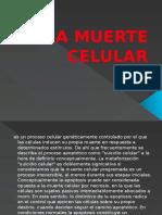 La Muerte Celular