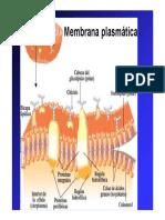 3-Membrana-fotosintesis-y-respiracion-2010.pdf