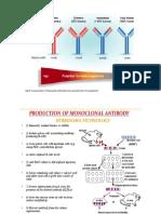 monoklonal antibodi