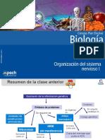 Clase 3 Organización Del Sistema Nervioso I 2015