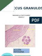Echinococcus granulosus.pptx