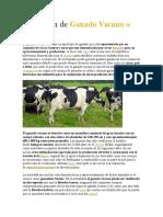 Definición De ganado bovino