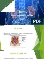 Anatomia De riñon 2016
