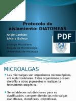 DIATOMEAS EXPO.pptx