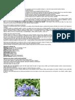 Coraje y Antipánico - Florales Misioneras