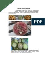 Tanaman Buah Kalimantan