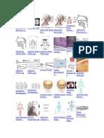 3D Female Skeleton A